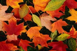 jesennelistie